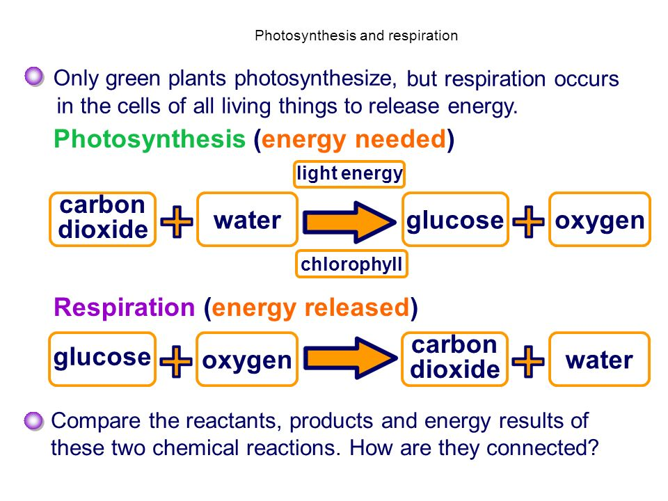 Spice Of Lyfe Chemical Equation For Respiration In Plants
