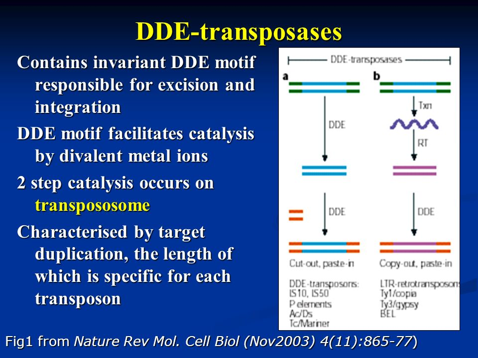 DDE-transposases Contains invariant DDE motif responsible for excision and integration. DDE motif facilitates catalysis by divalent metal ions.