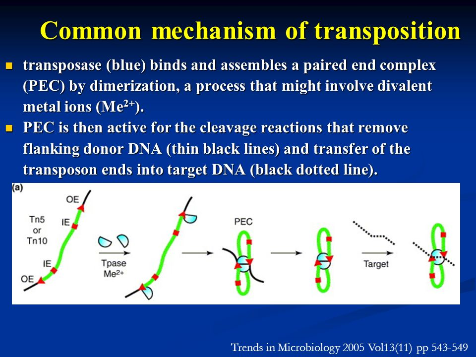 Common mechanism of transposition