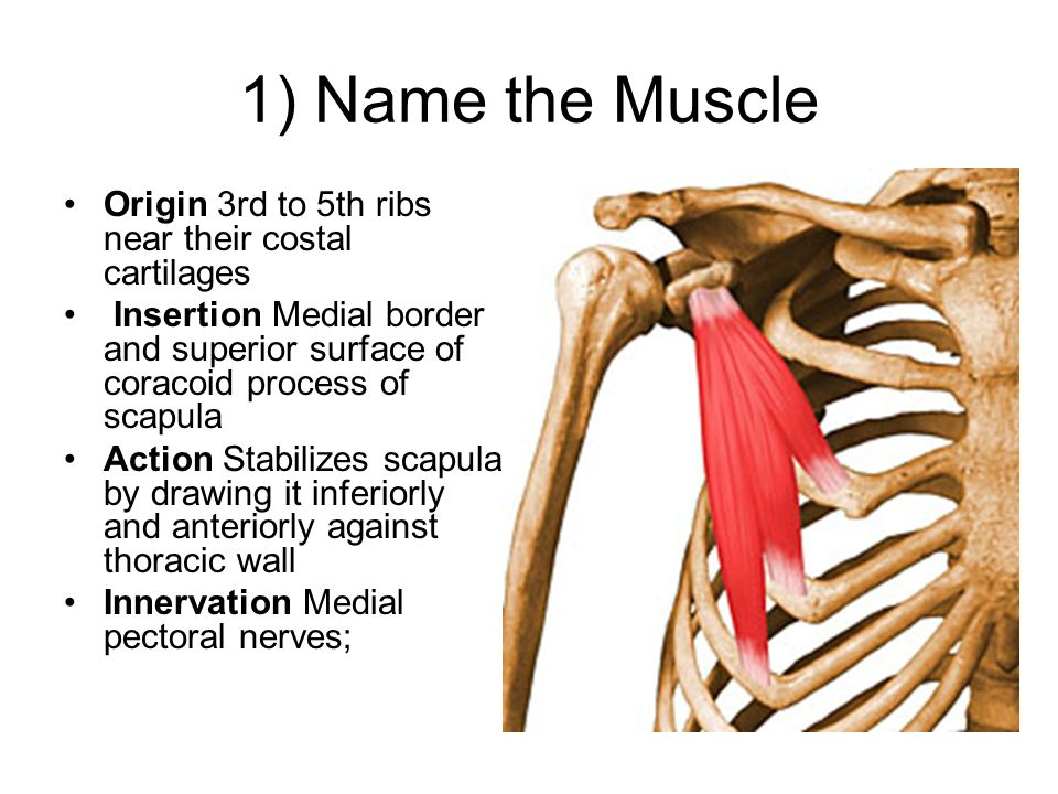 Muscles Quiz Ppt Video Online Download