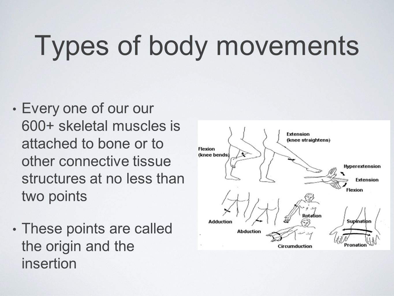 Muscle movements, types, and names - ppt video online download