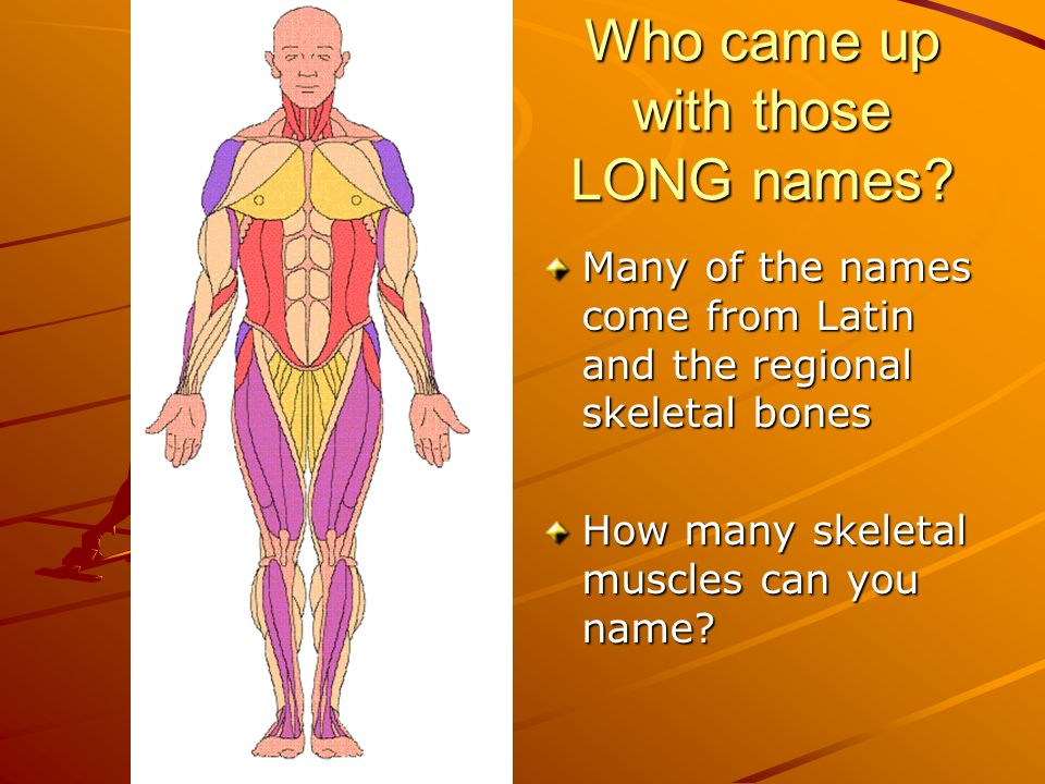 Muscle Kinesiology Anatomy & Physiology. - ppt download