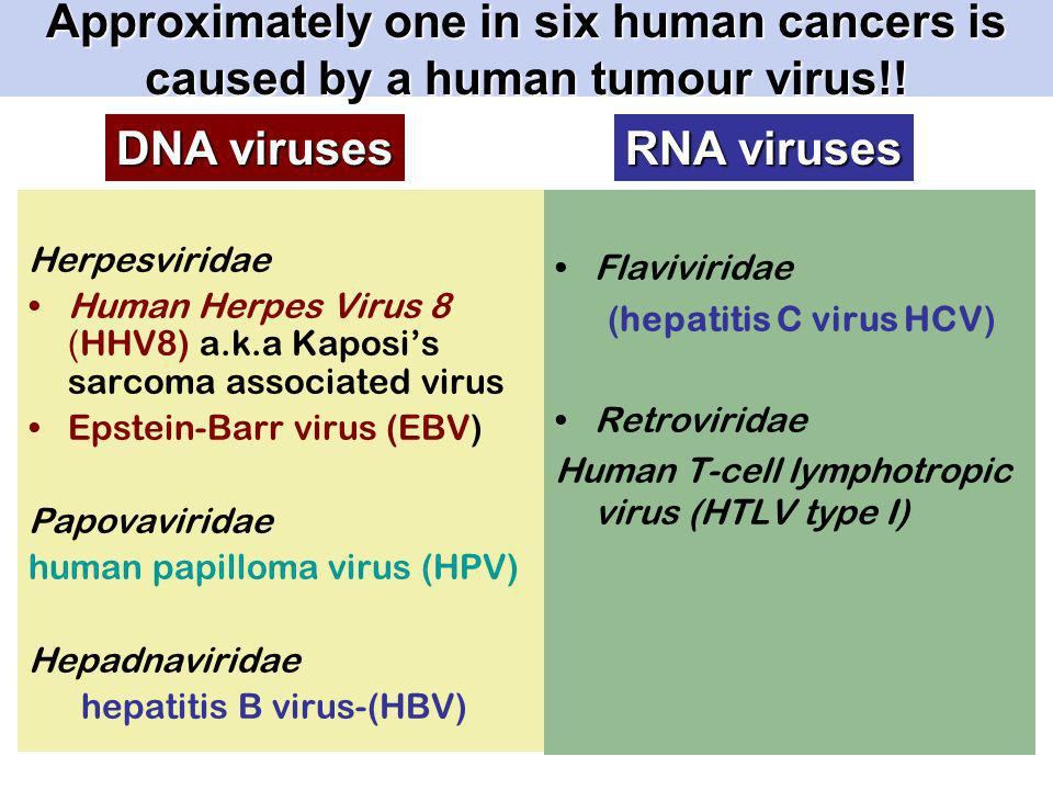 oncogenic viruses key concepts ppt video online download DNA vs RNA Structure approximately one in six human cancers is caused by a human tumour virus