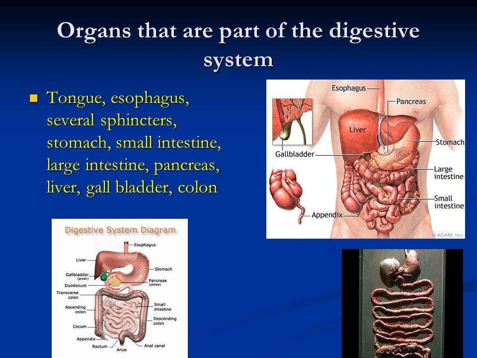 Block 2 Notes Digestive System Ppt Video Online Download