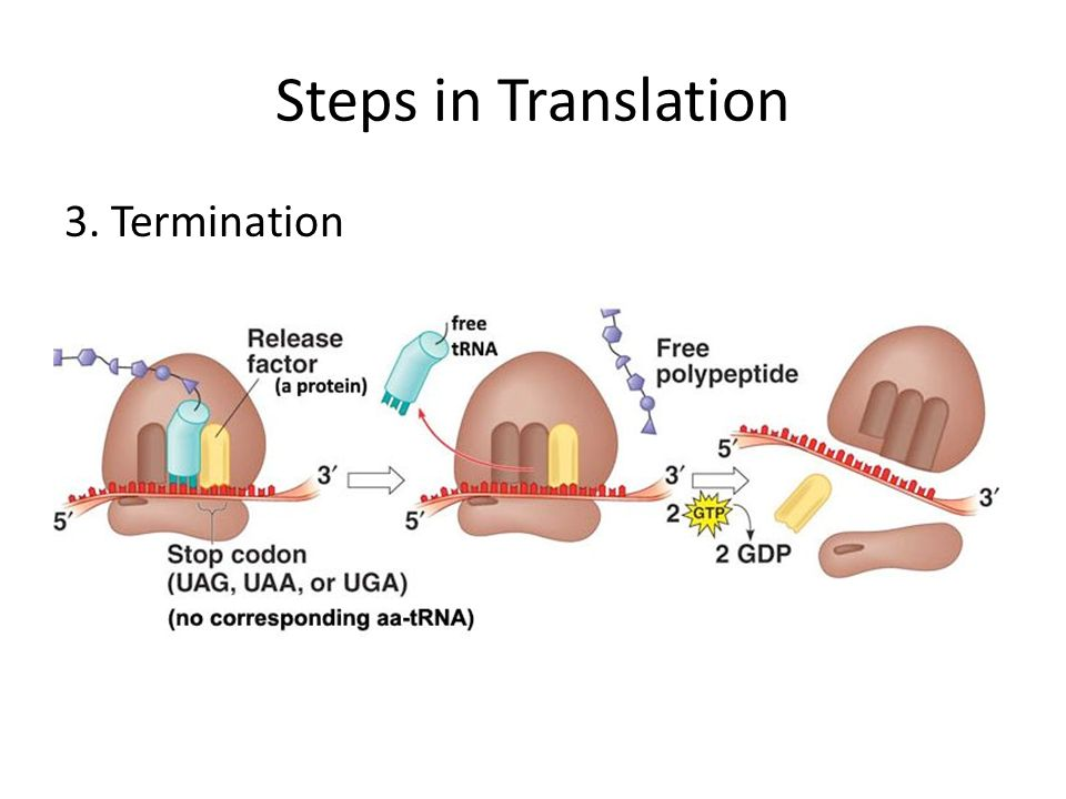 Steps in Translation 3. Termination