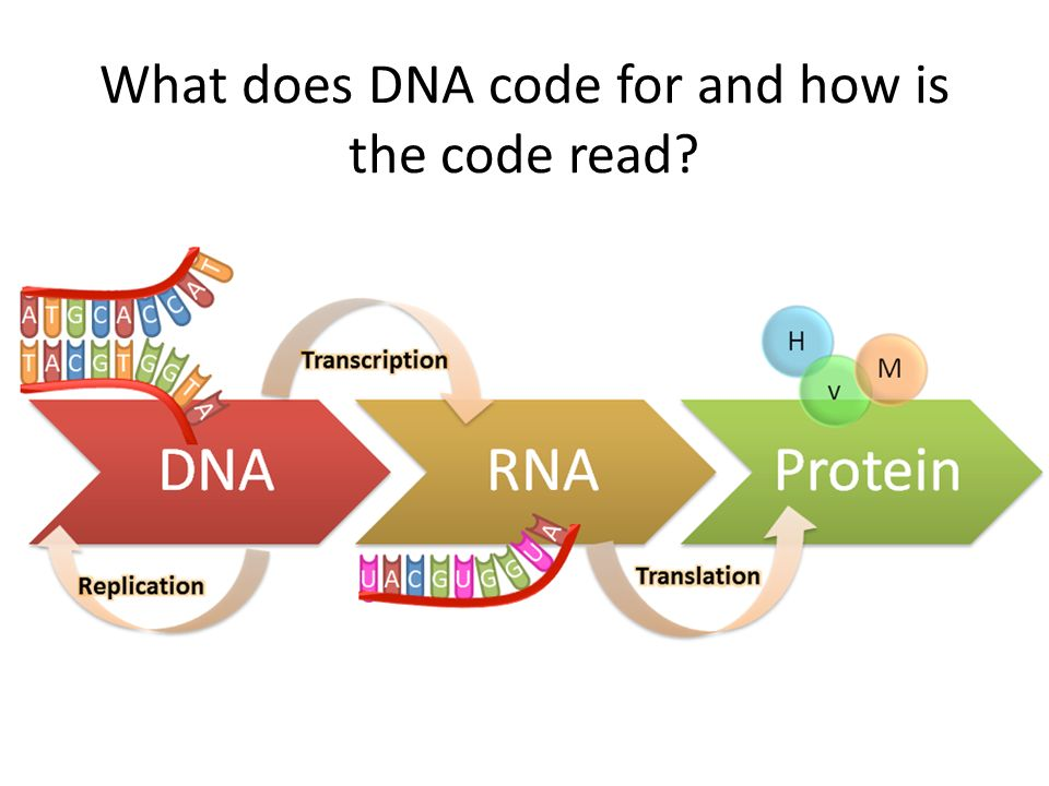 What does DNA code for and how is the code read