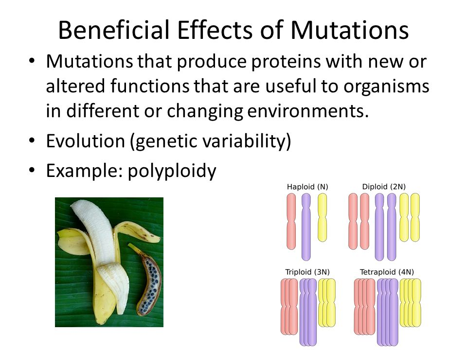 Beneficial Effects of Mutations