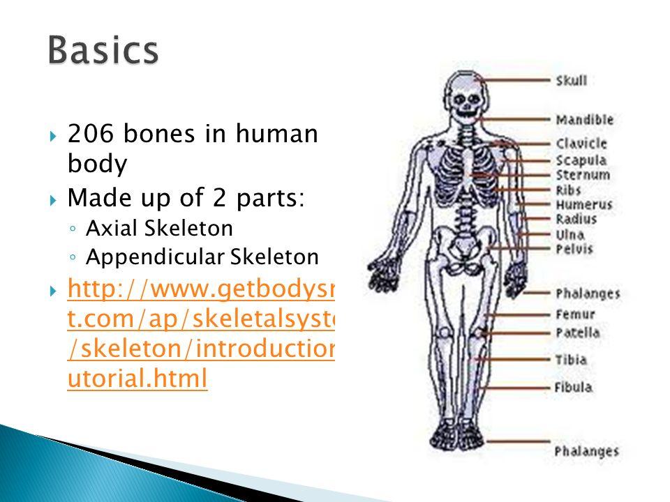 Skeletal Organization - ppt video online download