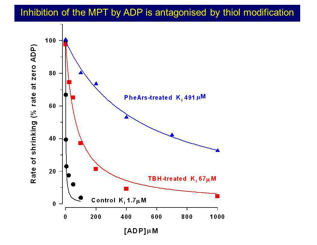 Inhibition of the MPT by ADP is antagonised by thiol modification
