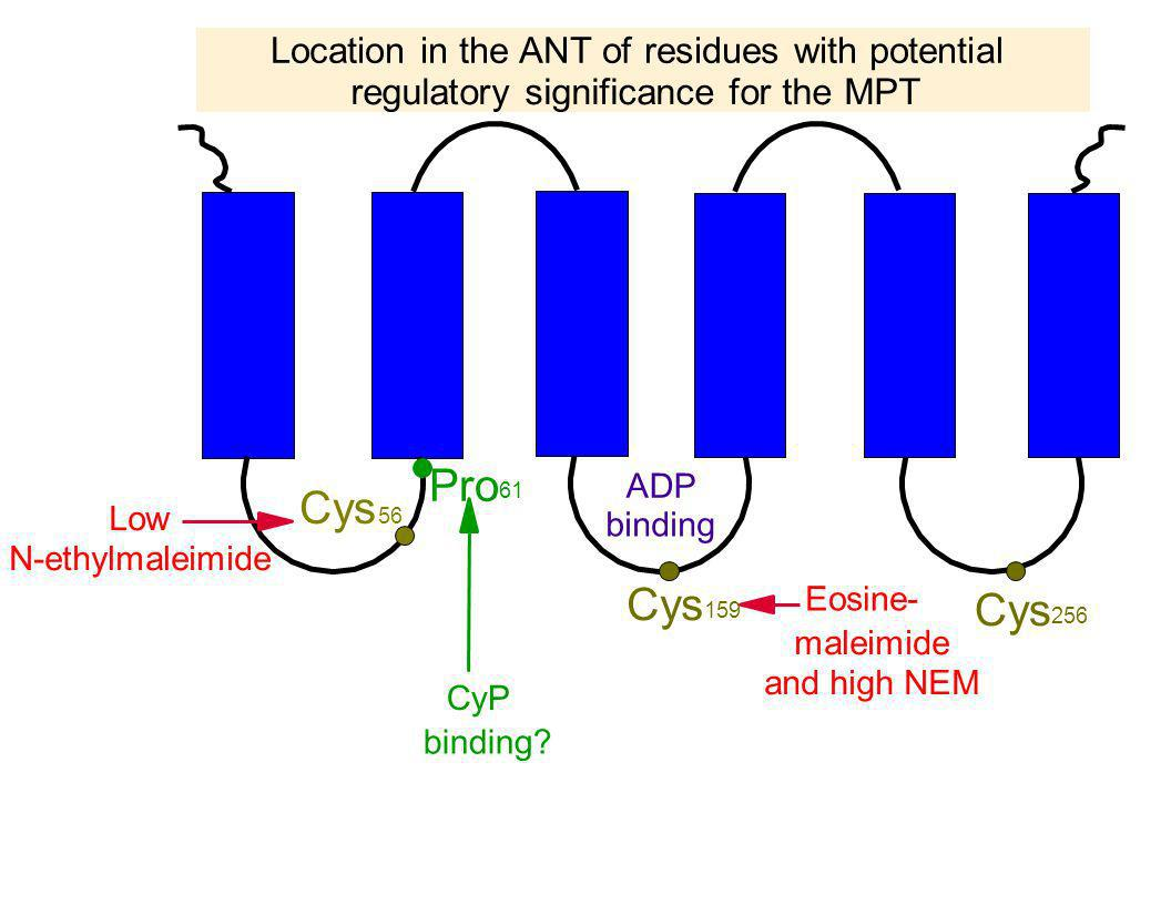 Pro Cys Cys Cys Location in the ANT of residues with potential