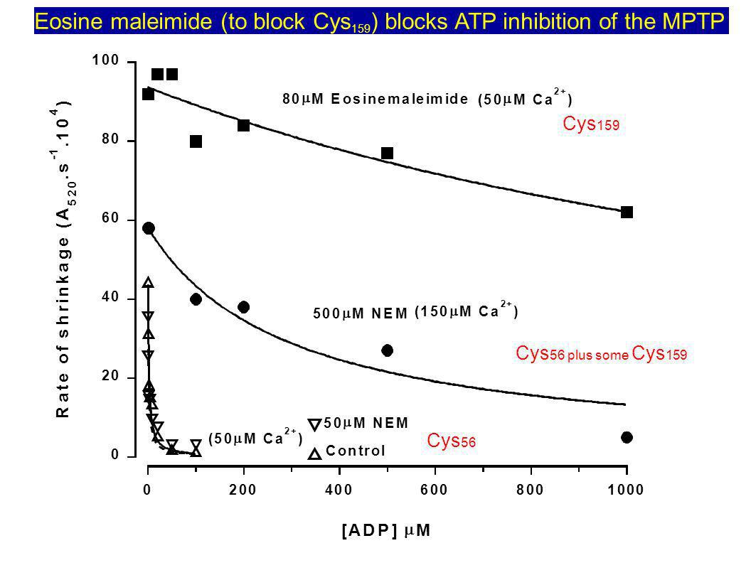Eosine maleimide (to block Cys159) blocks ATP inhibition of the MPTP