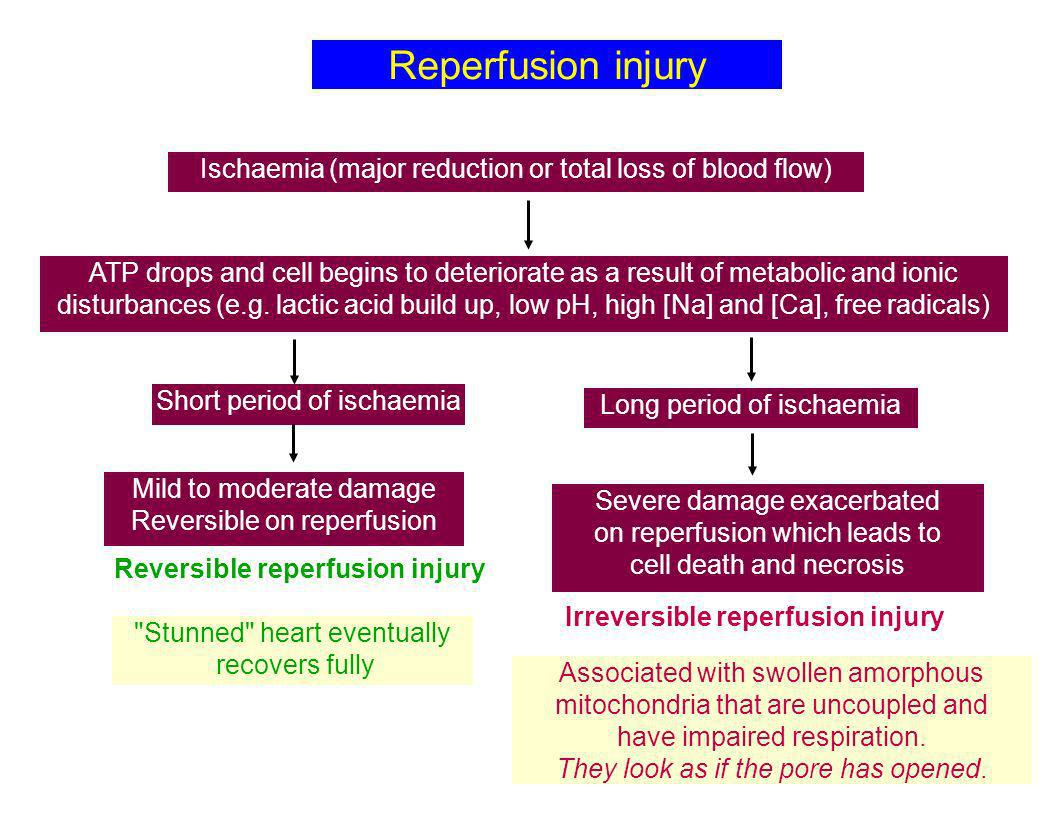 Reversible reperfusion injury Irreversible reperfusion injury