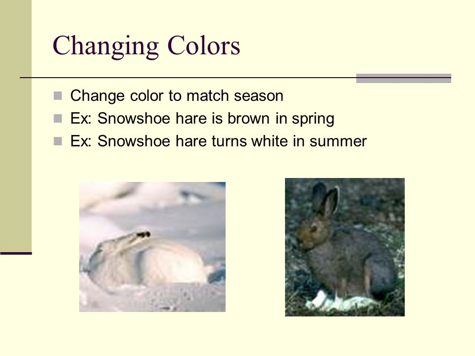 Animal Camouflage A Way Of Life Ppt Video Online Download