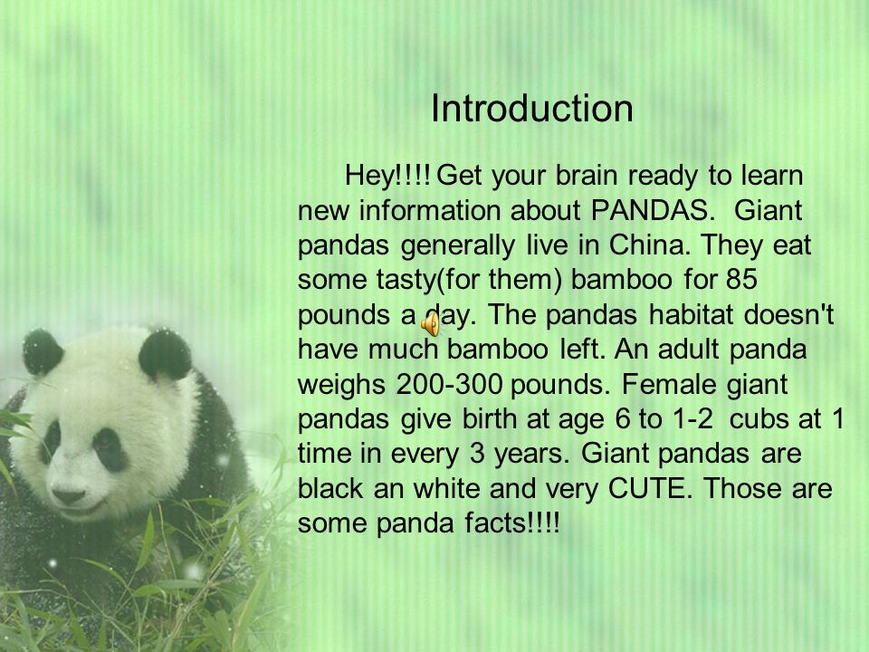 what does giant panda taste like