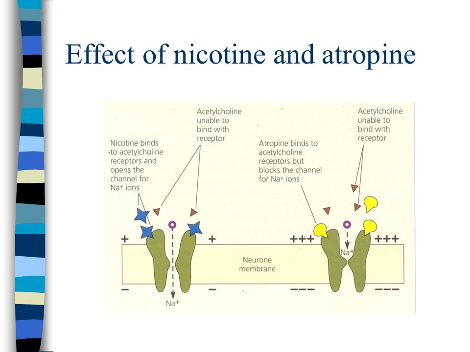 Effect of nicotine and atropine