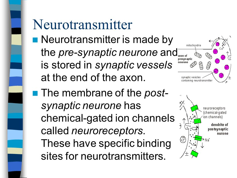 Neurotransmitter Neurotransmitter is made by the pre-synaptic neurone and is stored in synaptic vessels at the end of the axon.