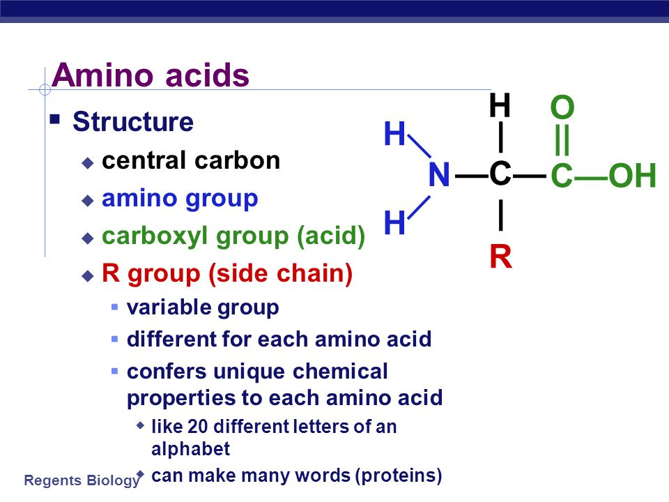 How Many Letters Are In The Amino Acid Alphabet