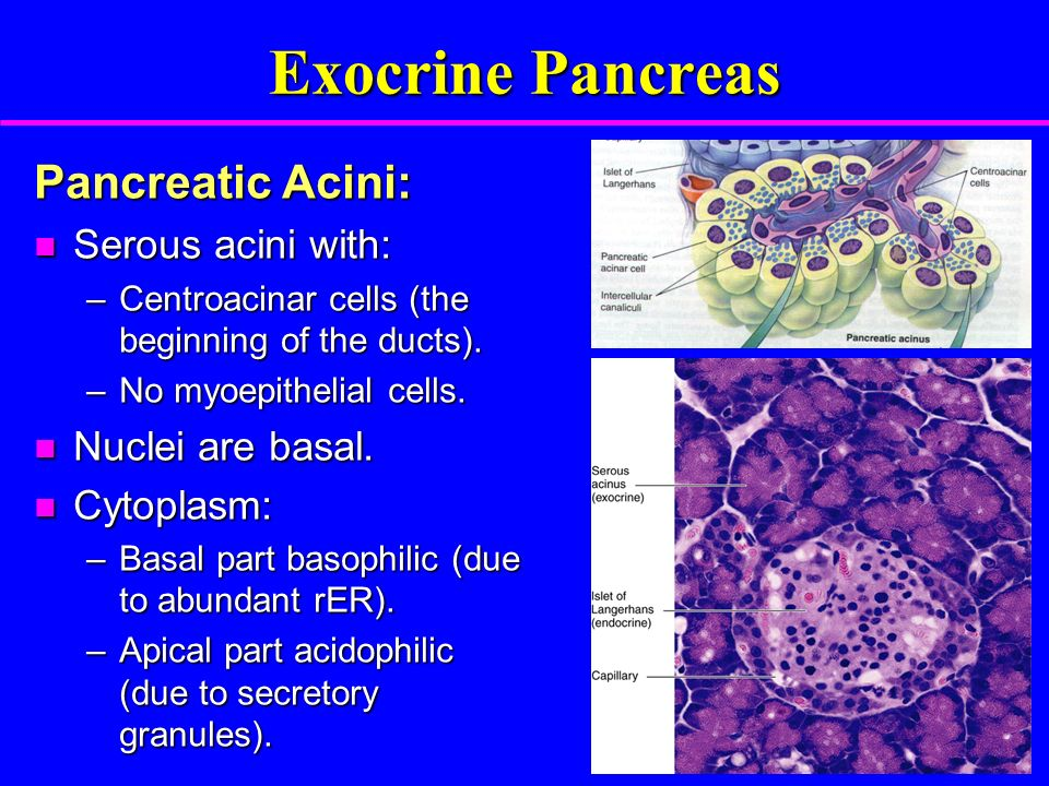Pancreas Objectives The Students Should Be Able To Describe 1 The