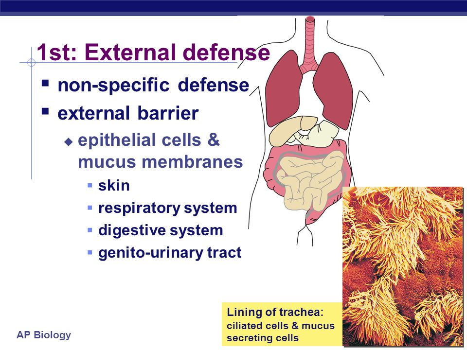 1st: External defense non-specific defense external barrier