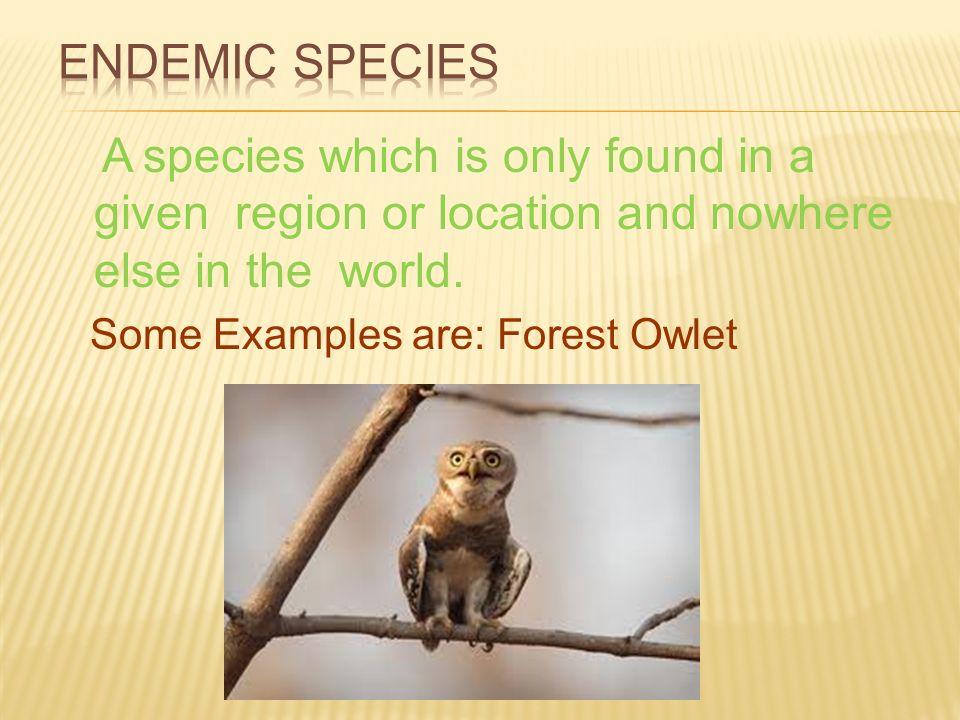 Endemic Species Examples