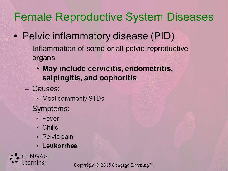 Reproductive System Diseases And Disorders Ppt Download