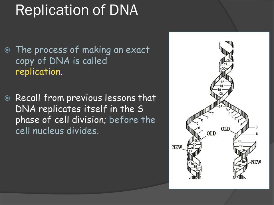 biotechnology and dna replication processes biology essay Dna replication is the biological process that happens to occur in all organisms and it copies thier dna, it's the basic process for biological inheritance this process all begins when one double helix dna molecule produces two exact identical copies of the molecule.