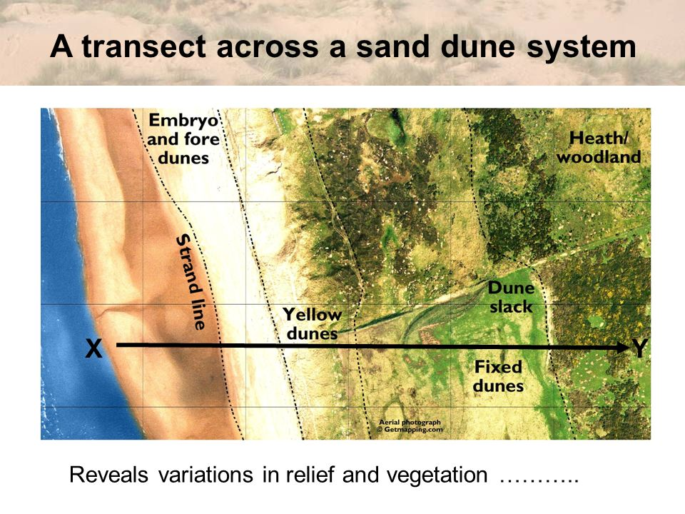 A transect across a sand dune system