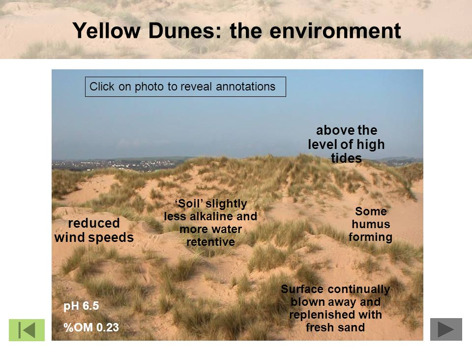 Yellow Dunes: the environment