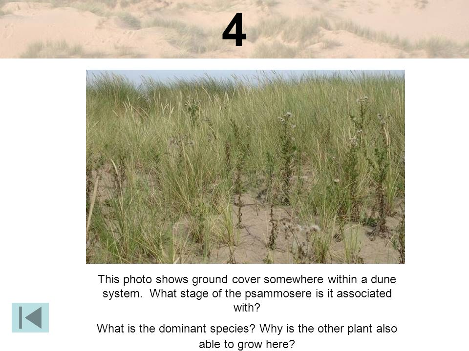 4 This photo shows ground cover somewhere within a dune system. What stage of the psammosere is it associated with