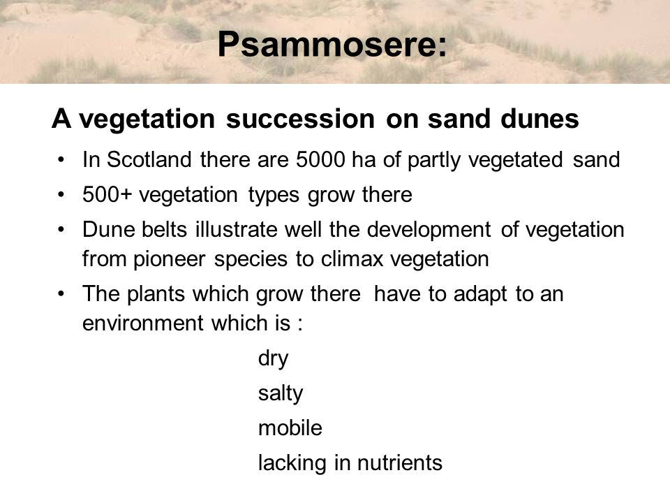 Psammosere: A vegetation succession on sand dunes