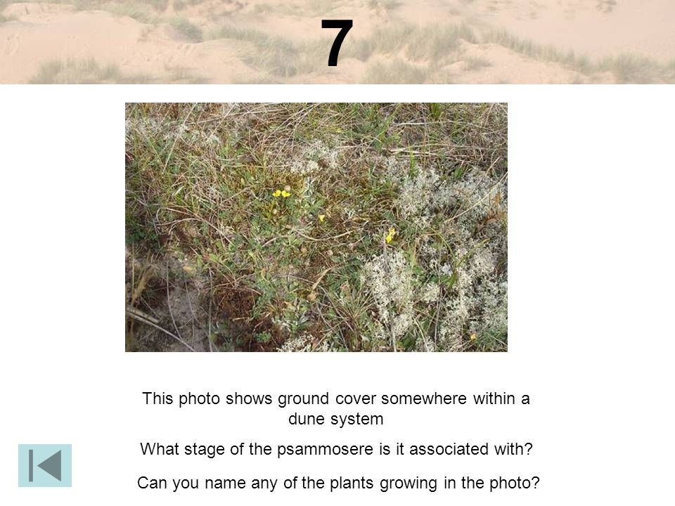 7 This photo shows ground cover somewhere within a dune system