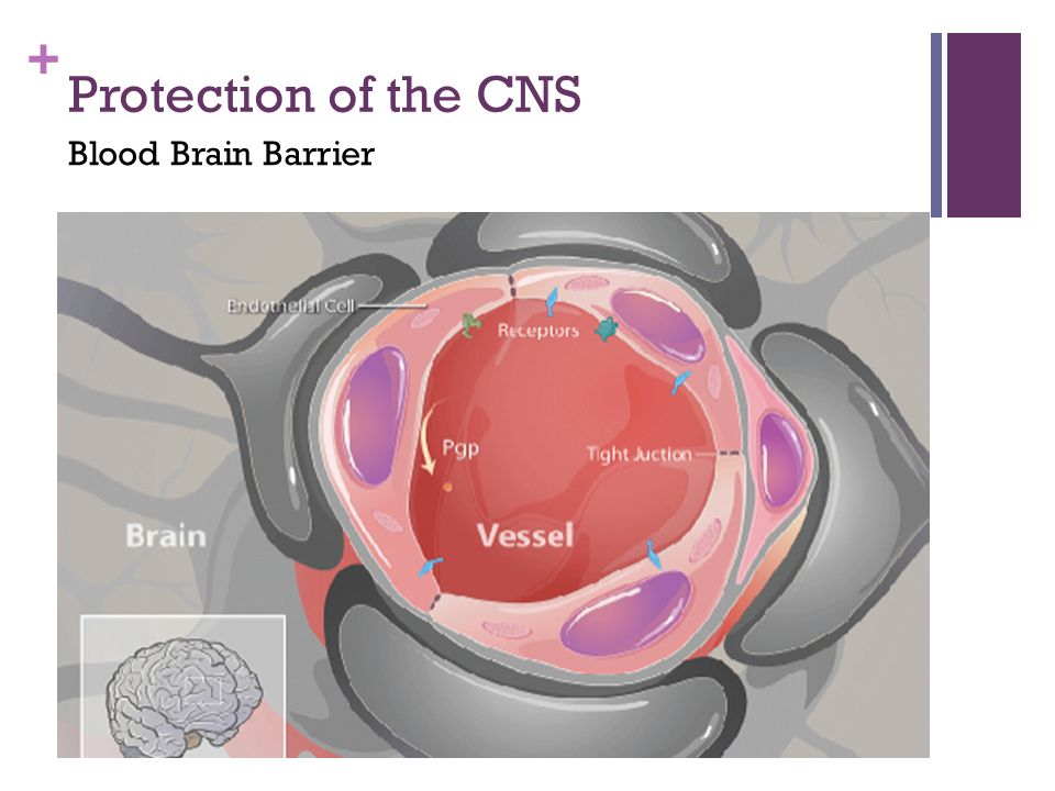 Protection of the CNS Blood Brain Barrier