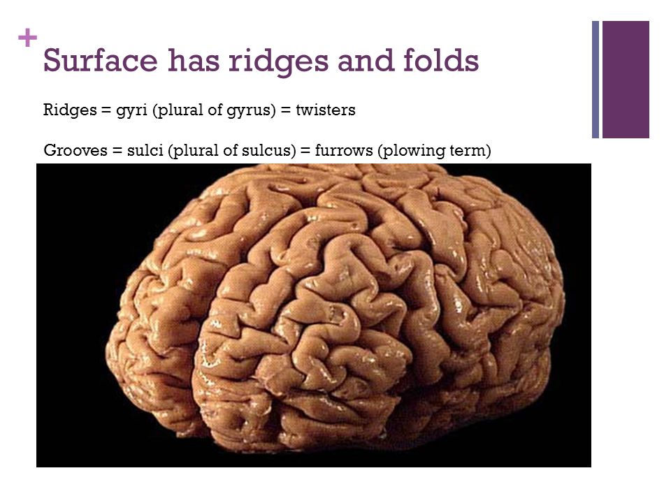 Surface has ridges and folds