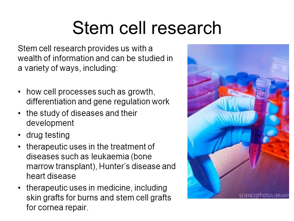 Stem cell research Stem cell research provides us with a wealth of information and can be studied in a variety of ways, including: