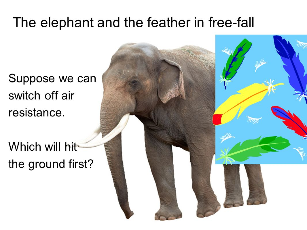 Elephants In Free Fall >> In This Section We Will Ppt Video Online Download