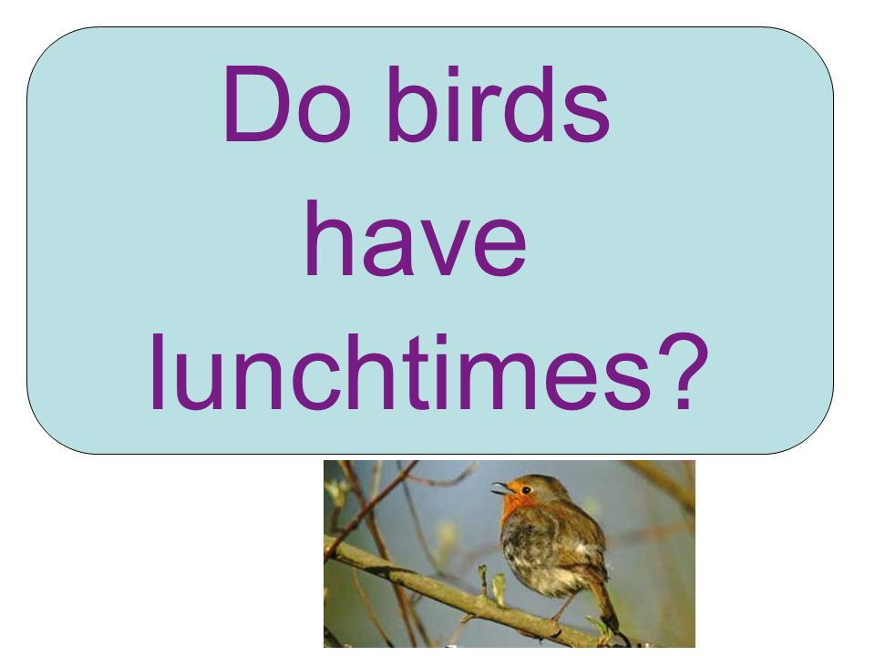 Do birds have lunchtimes