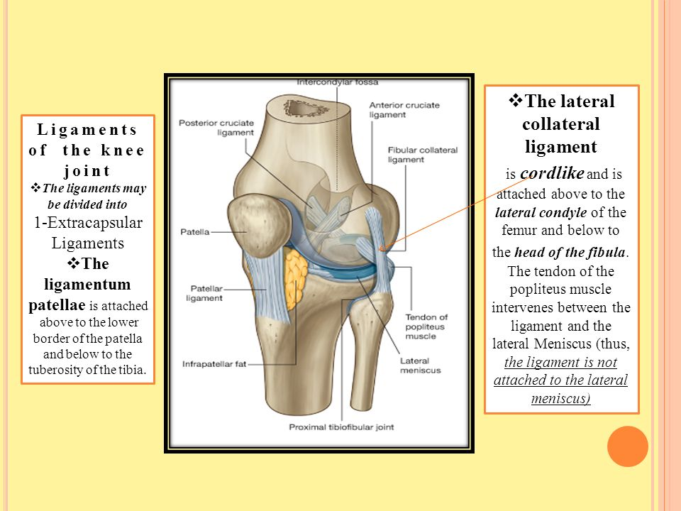Knee Joint Type Is The Most Complicated Joint In The Body Ppt