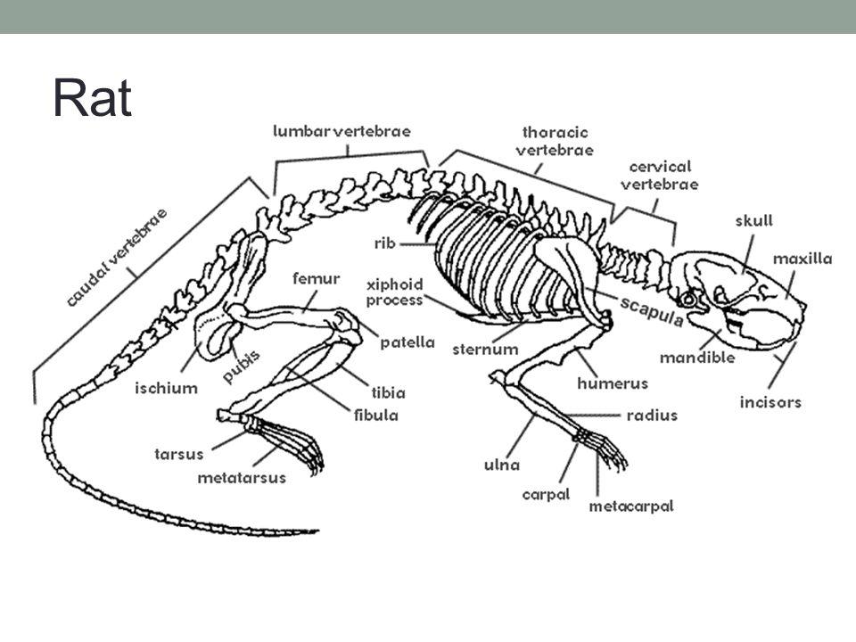 Equine Skeletal Systems - ppt video online download