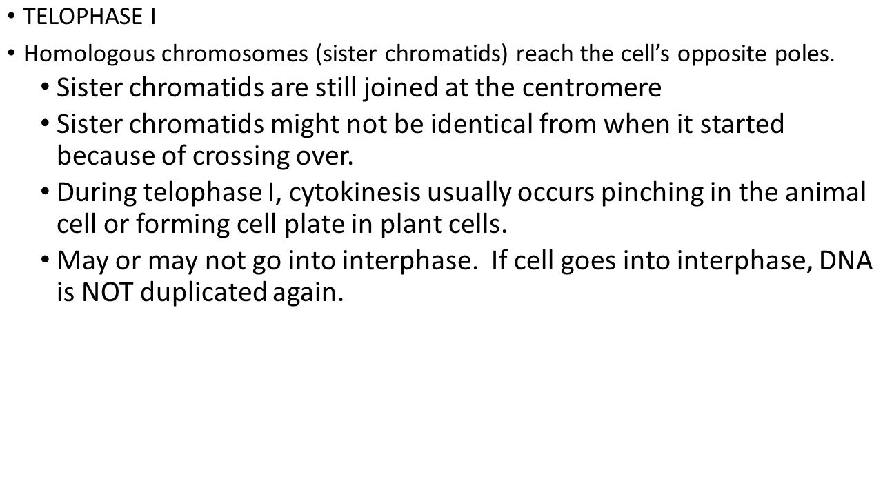 Sister chromatids are still joined at the centromere