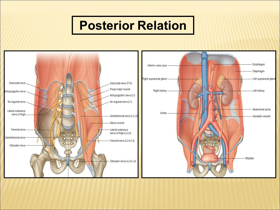 Posterior Relation