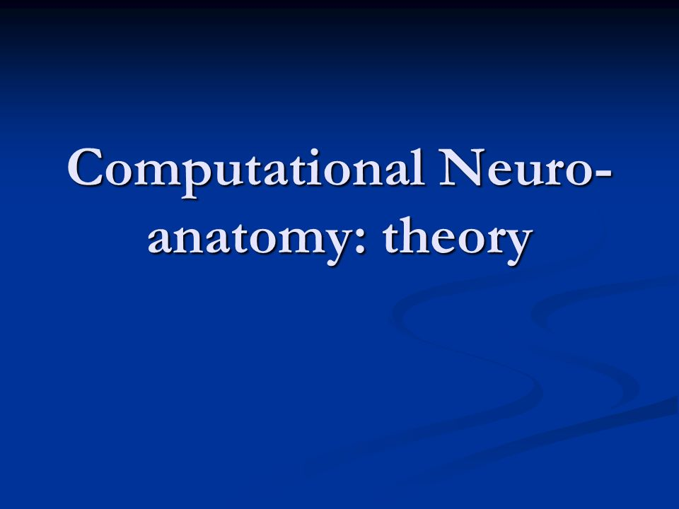 Computational Neuro-anatomy: theory