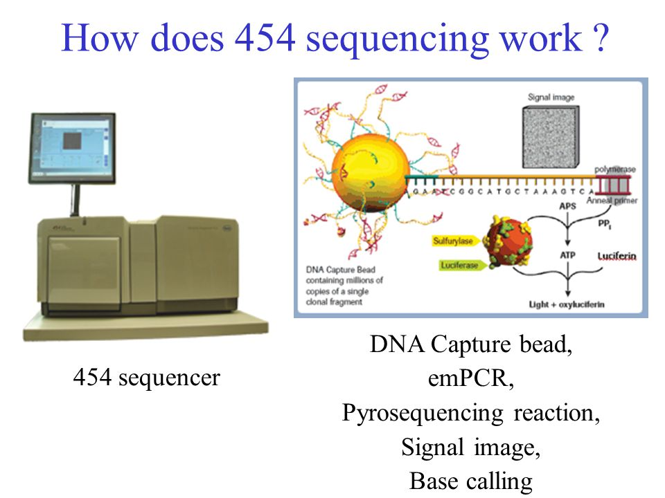 How does 454 sequencing work