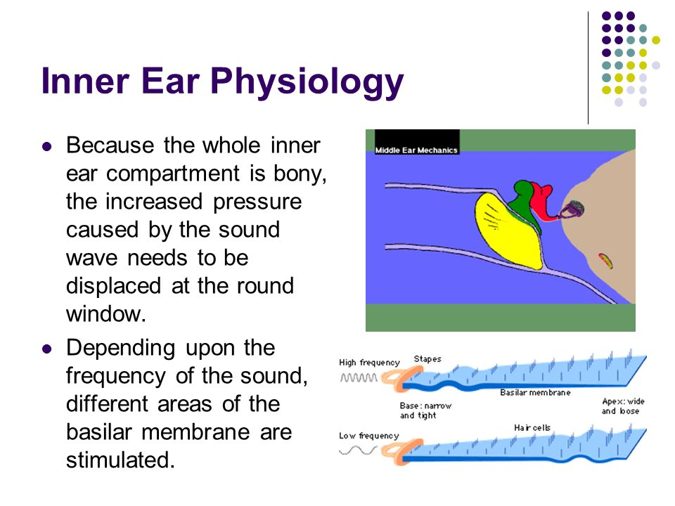 Inner Ear ppt video online download