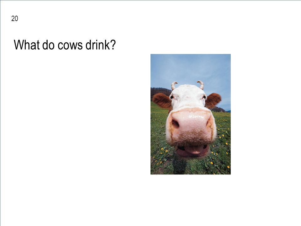 20 What do cows drink water