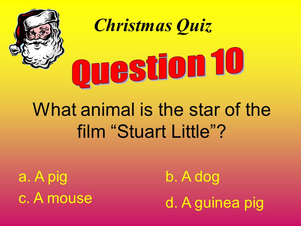 What animal is the star of the film Stuart Little