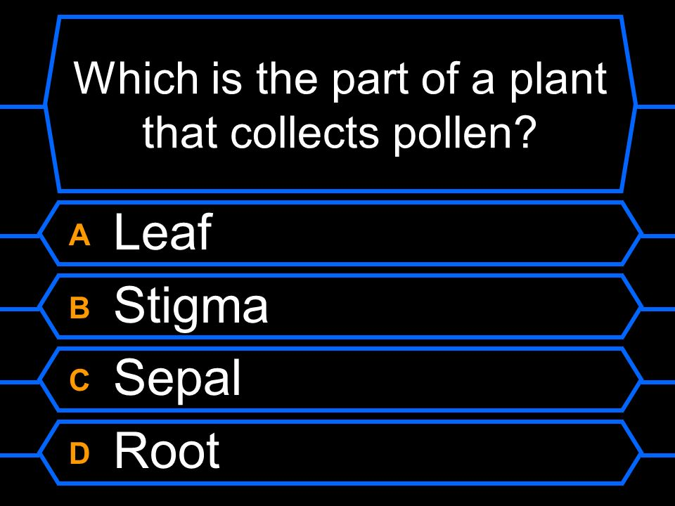 Which is the part of a plant that collects pollen
