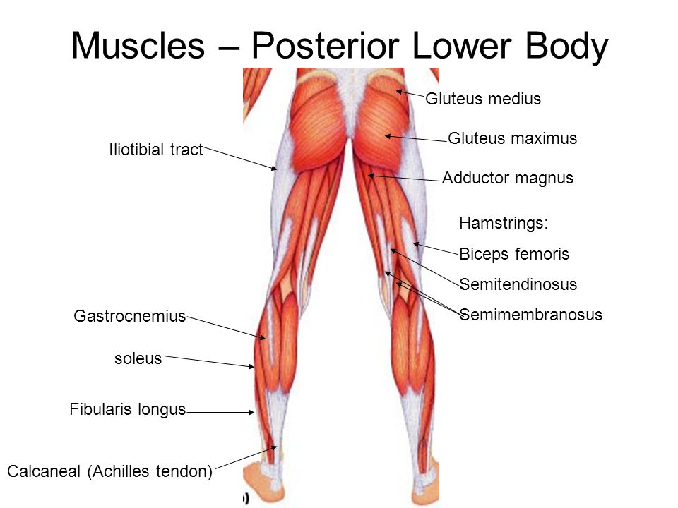 Chap 10 Muscles Learning Objectives Ppt Video Online Download