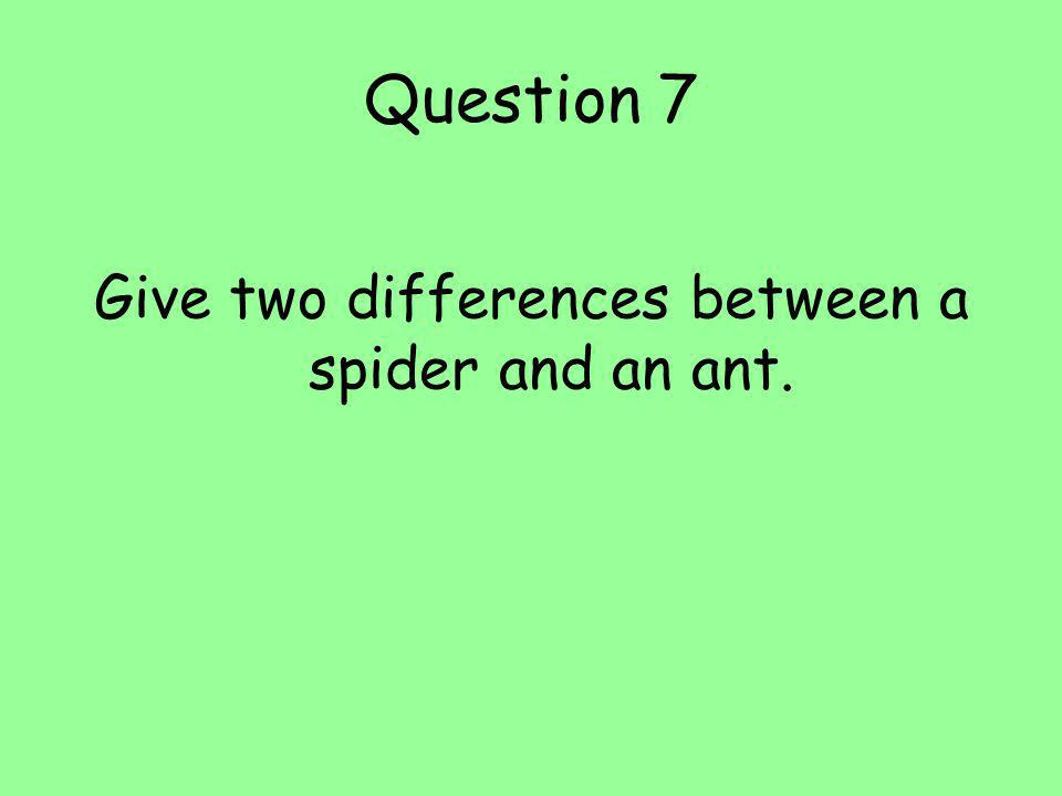 Give two differences between a spider and an ant.