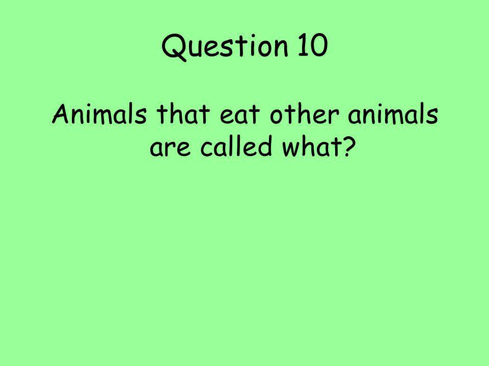 Animals that eat other animals are called what