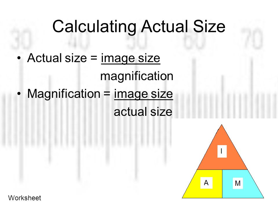 Calculating Cell Size Ppt Video Online Download